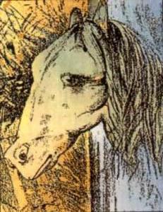 rana-y-caballo2